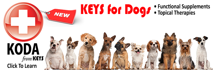 Keys for Dogs